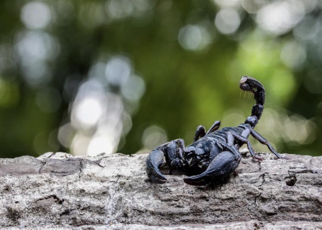datazione pesci uomo Scorpione donna